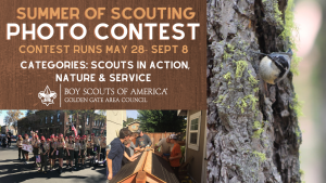 Banner image for summer camp photo competition showing contest summary and thumbnails of Scouts in Action and a bird on a tree trunk.